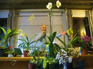 Orchidee - Graziano Grando